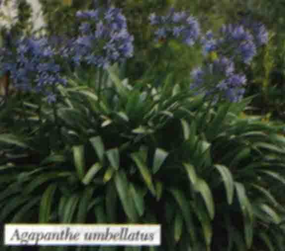Gu a de plantas for Plantas de exterior chile